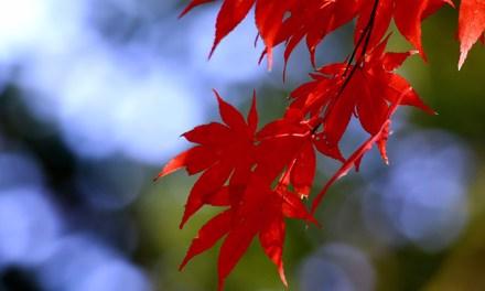 가을 등산, 단풍놀이 A to Z