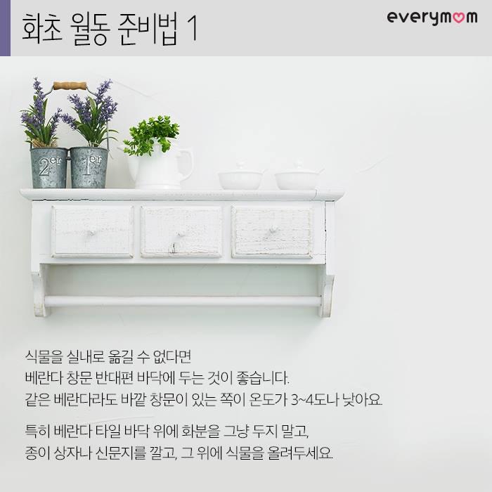 flowering plant 04