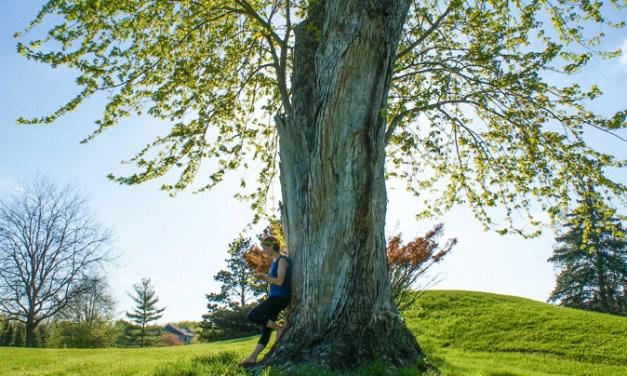 도심 속 작은 쉼터, 나무그늘프로젝트