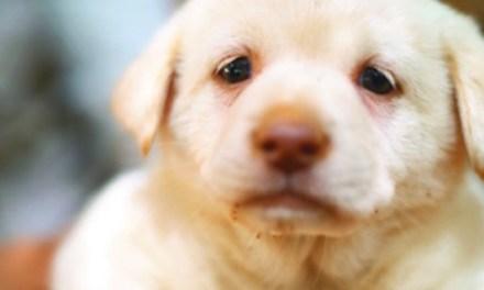 [유기견 입양 캠페인, 강아지가 사람을 사랑하듯] 버림받고도, 사람을 기다립니다