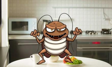 약으로도 효과 없는 바퀴벌레 퇴치법