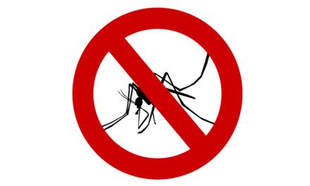 벌레는 이제 그만! 확실한 여름철 벌레 퇴치 방법 5가지!