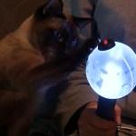 #2 고양이를 위한 집사의 바쁜 하루