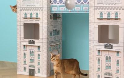 고양이 집사의 럭셔리한 아이템4 (feat. 집 목욕 간식)