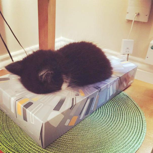 cute-sleeping-animals-65__605