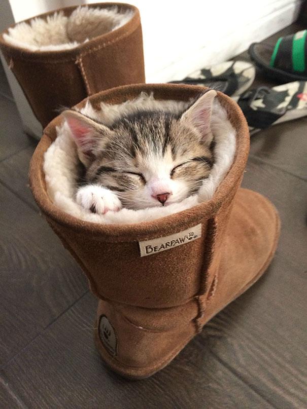 cute-sleeping-animals-78__605