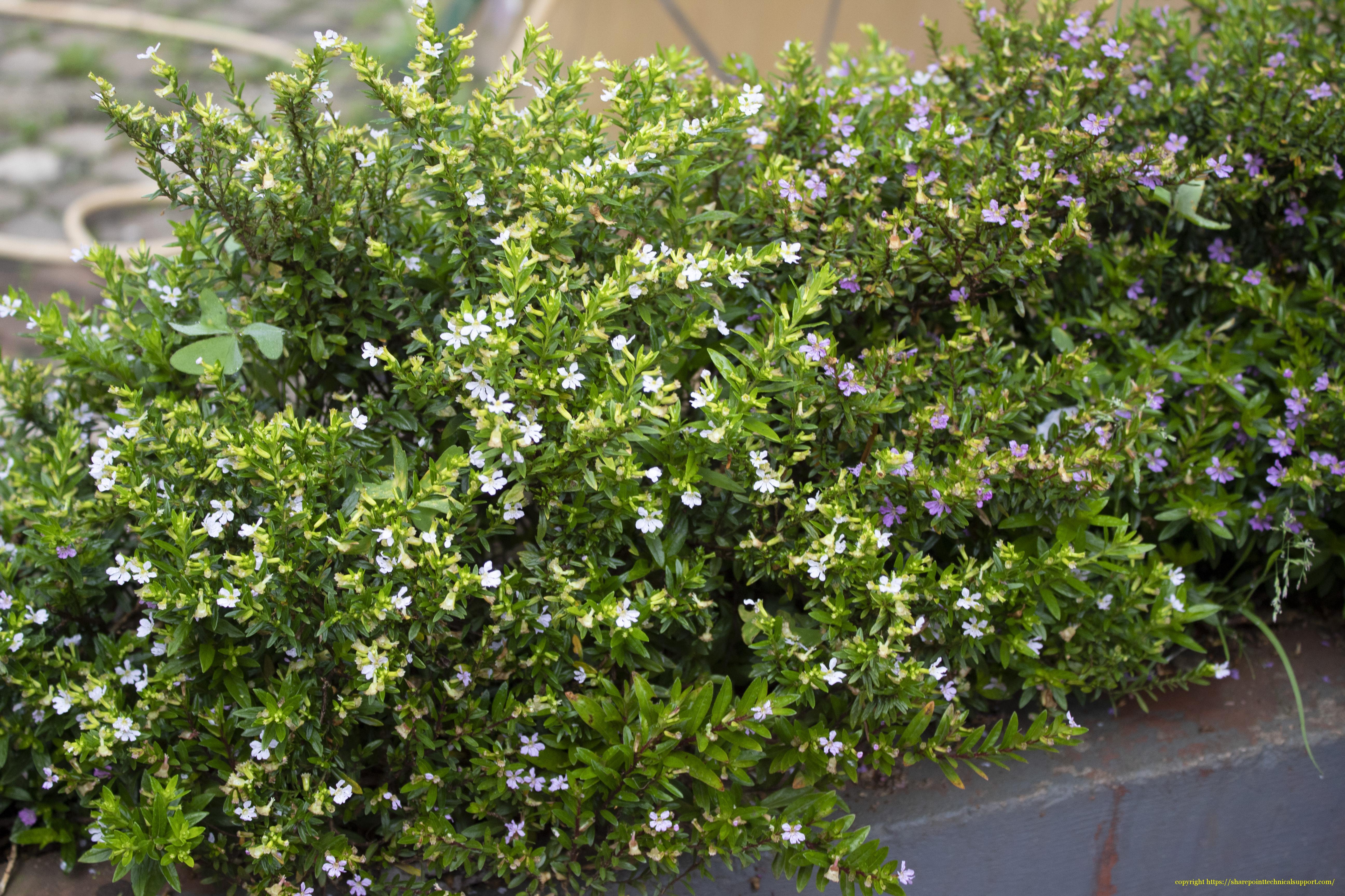 flower plant ooty