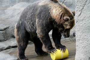 bear cannister