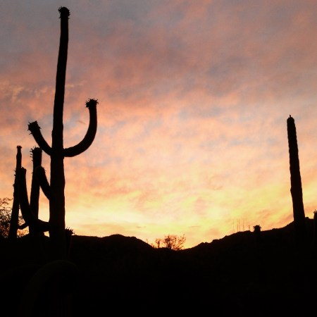 Cactus in Arizona are really neat