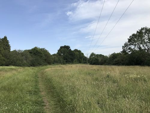 Discovering the open spaces of Ruislip