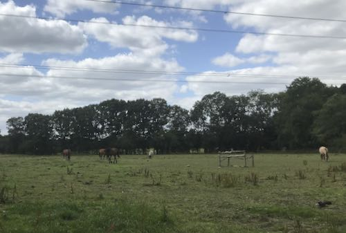 All round Chalfont St Giles you'll find stables and horses
