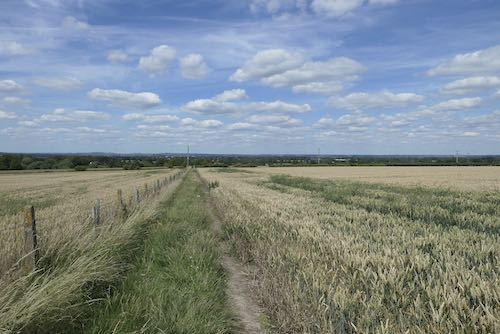 Walking beside the fields of wheat on the return to Wendover