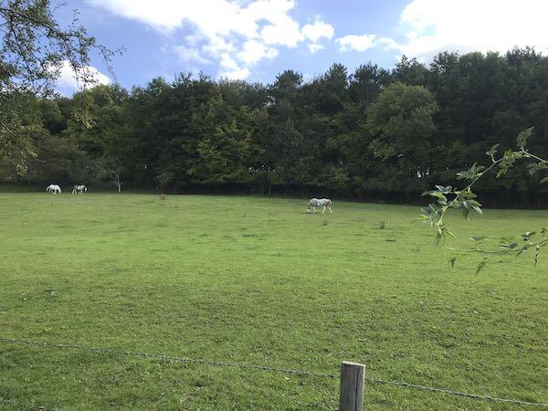 Horses grazing in Flaunden Bottom