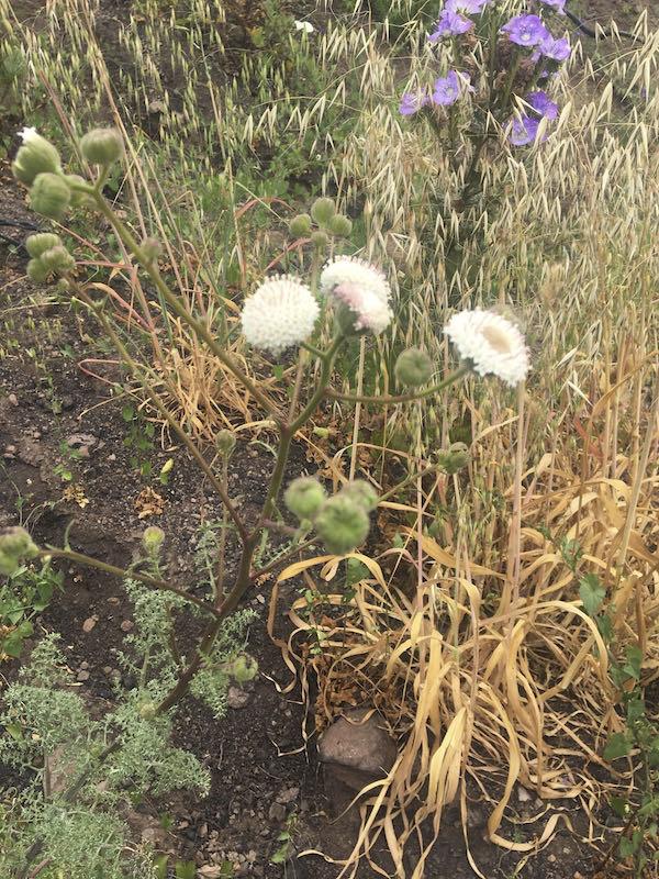 Pyrophytes on the Mishe Mokwa Regeneration trail