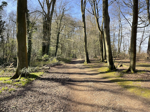 The first woods on the Misbourne Valley loop