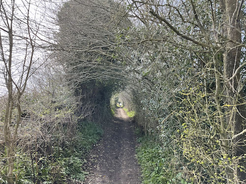 The narrow lane on  the Misbourne Valley loop