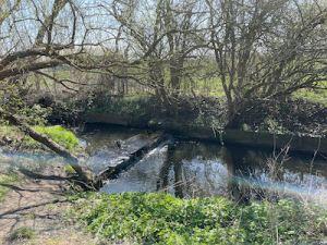 Yeading Brook Trail, N Harrow to Ickenham, easy ramble