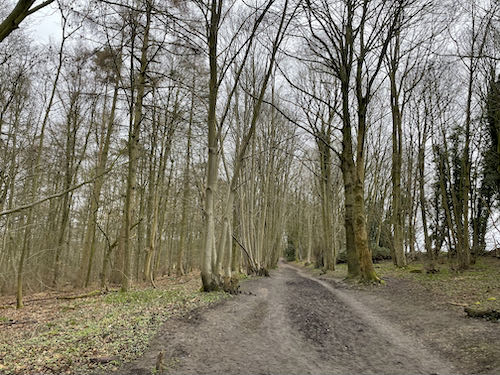 The first wooded section on the Chess Valley Circular walk