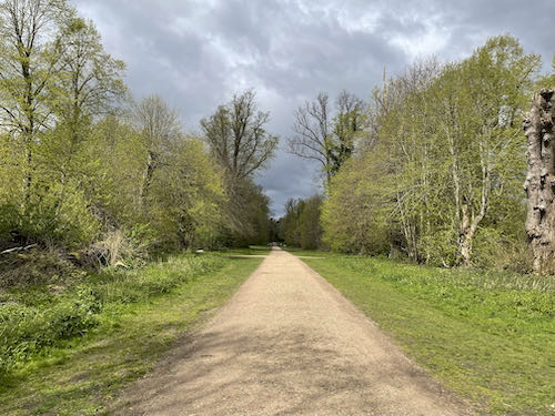 Lime Avenue on the Rickmansworth to Whippendell loop walk