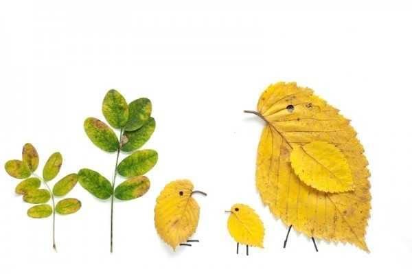 Gambar Kolase Alami Bentuk Anak Ayam