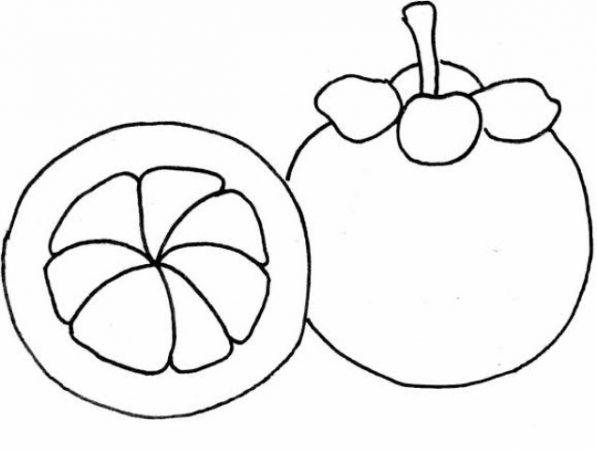 Sketsa Gambar Buah Manggis