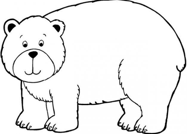 Sketsa Gambar Hewan Beruang