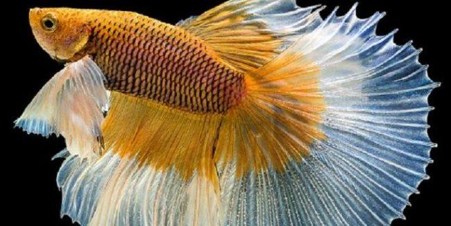 Pengertian sisik ikan