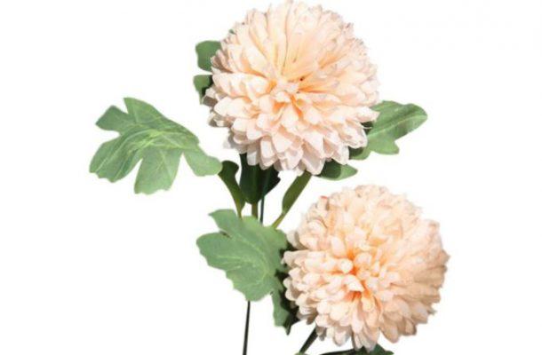 Bunga Dandelion dari Woll