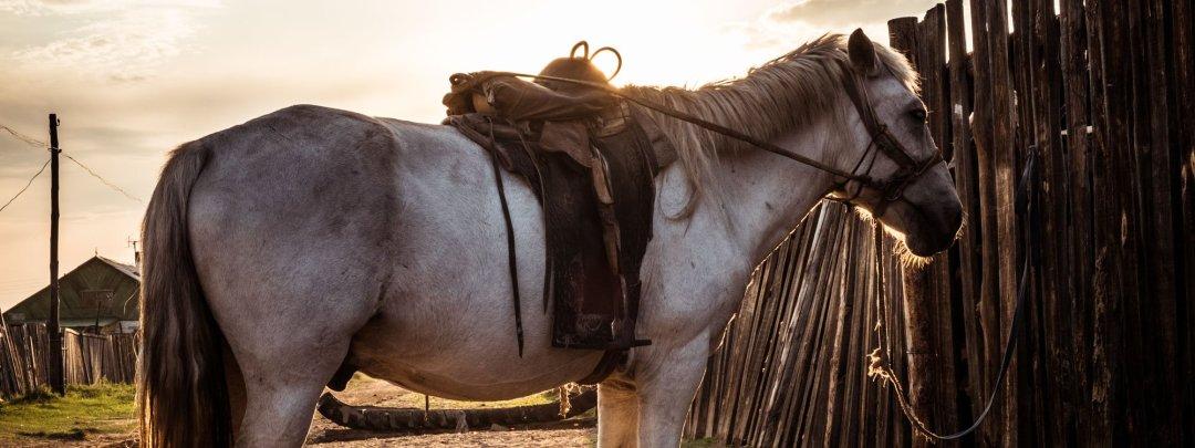 Horse at sunset Sukhbaatar, Mongolia