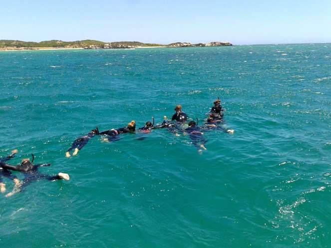 dolphin-swim