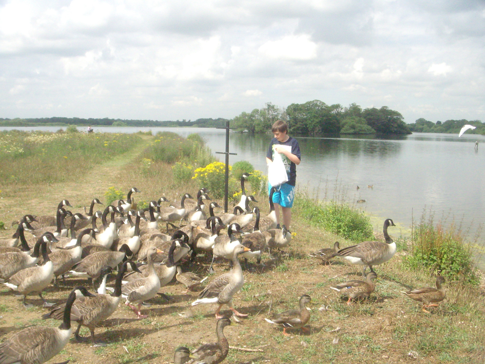 sharingourfoodadventures.com Jacob backing into the Mere, surrounded by the birds.