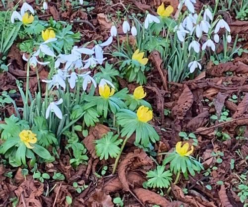 Flowers in church yard, Masham, Yorkshire