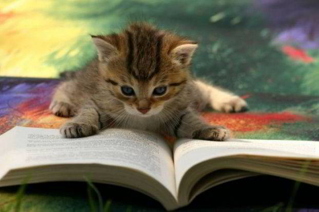 Cuddly beta readers - have claws!