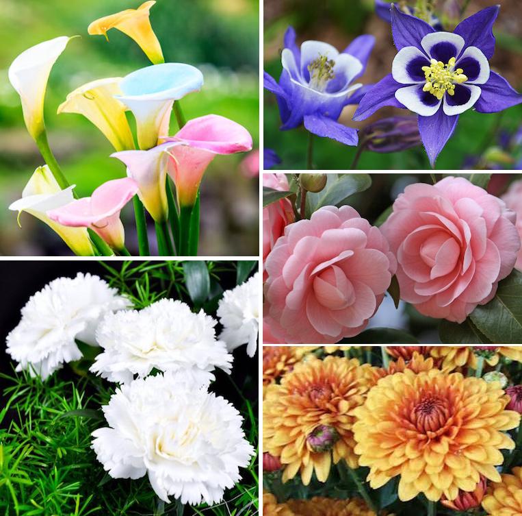 flowers C