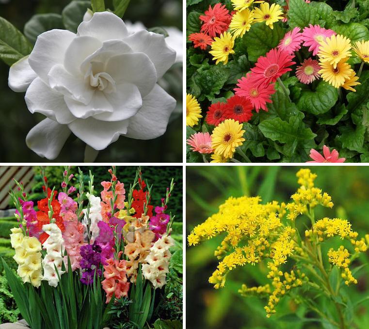 flowers G