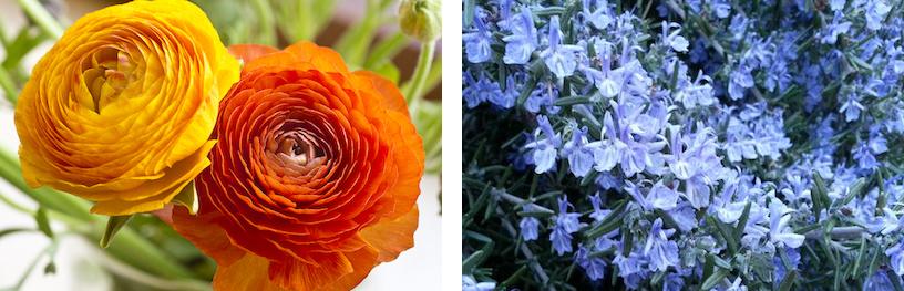 r-flowers