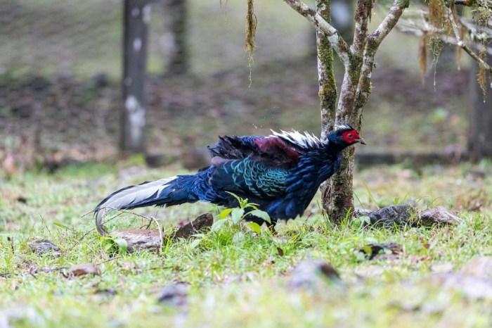 福山植物園 來場和野生動物不期而遇的清新約會吧!宜蘭森林生態秘境