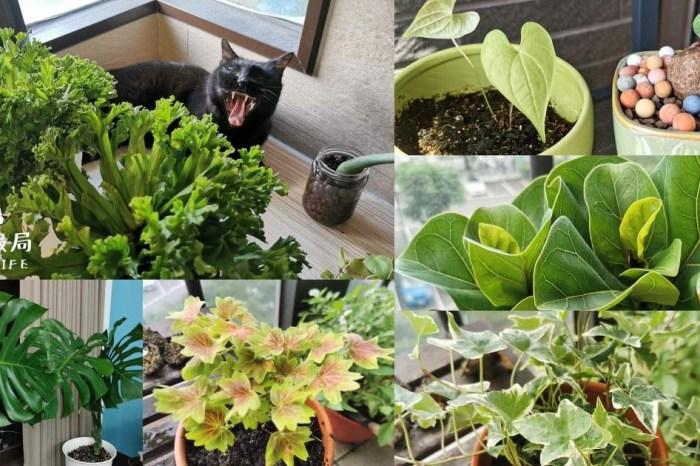 選對植物,都市小陽台也能滿滿綠意!新手好種植物、網紅植物、台中園藝店及必買IKEA花架