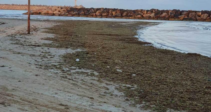 אצות בחוף הים הרצליה מאי 2020