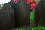 grave stones azaleas sm
