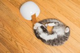 Cat playing with cat toy