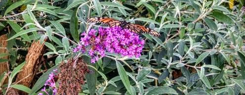 Butterfly on Flower ©Sydney Osborne