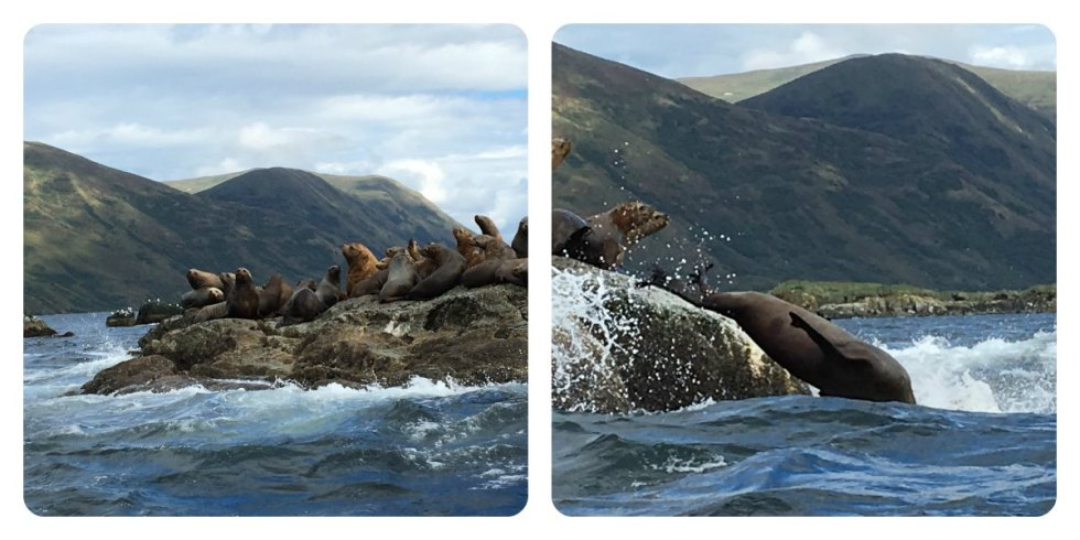 alaska-collage-2