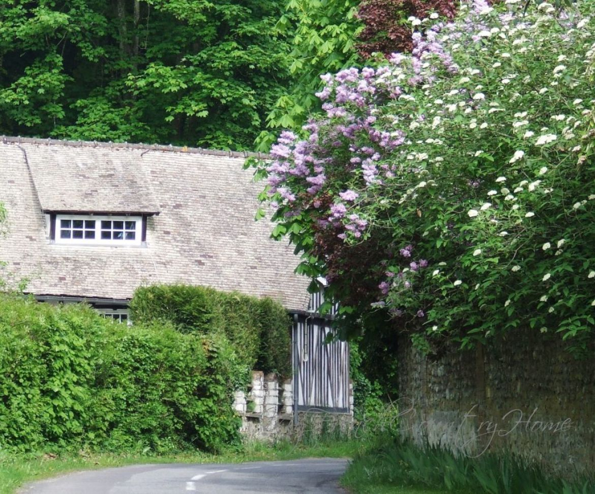 lilac over walls in normandy