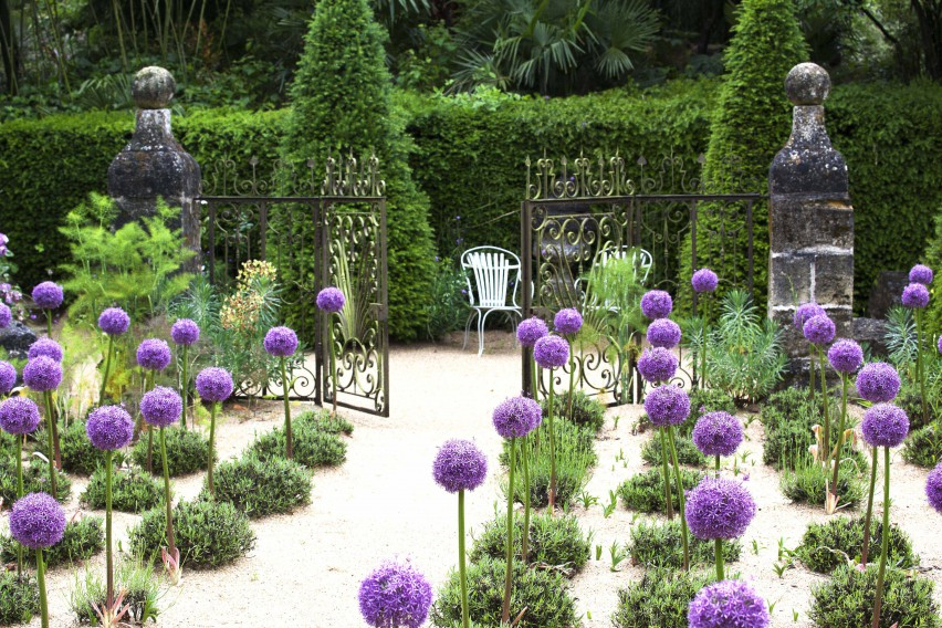 lavender and agapanthus