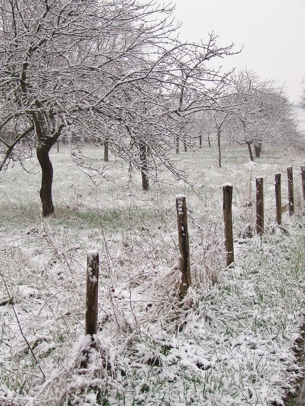 snow in orchard