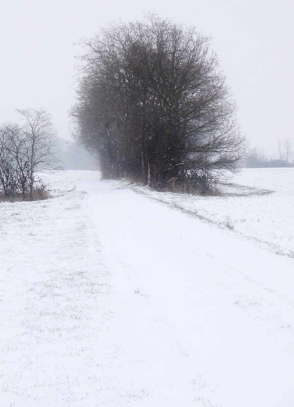 snow on winter path