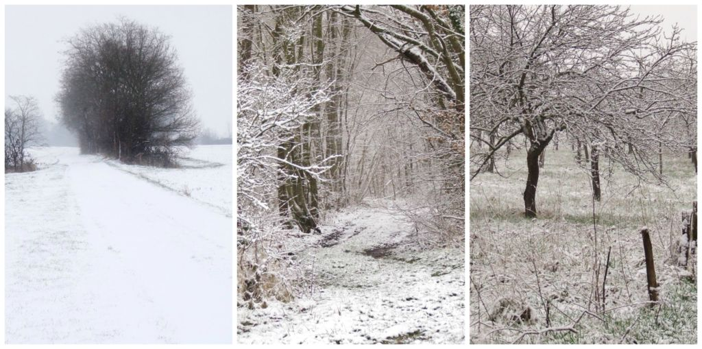 winter scenes in the countryside