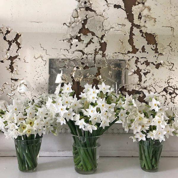 paperwhites in front of mirror
