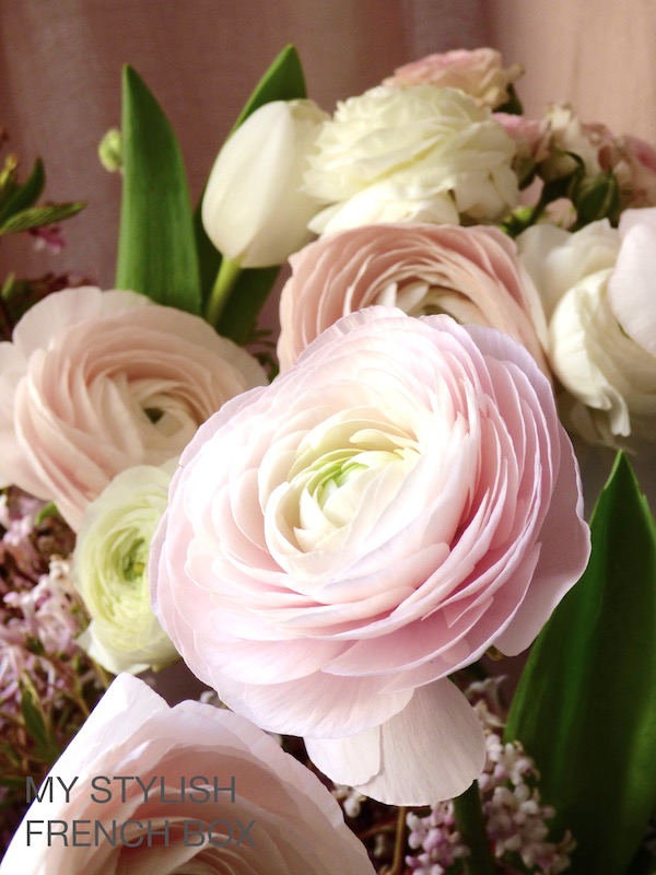 pink raununculus